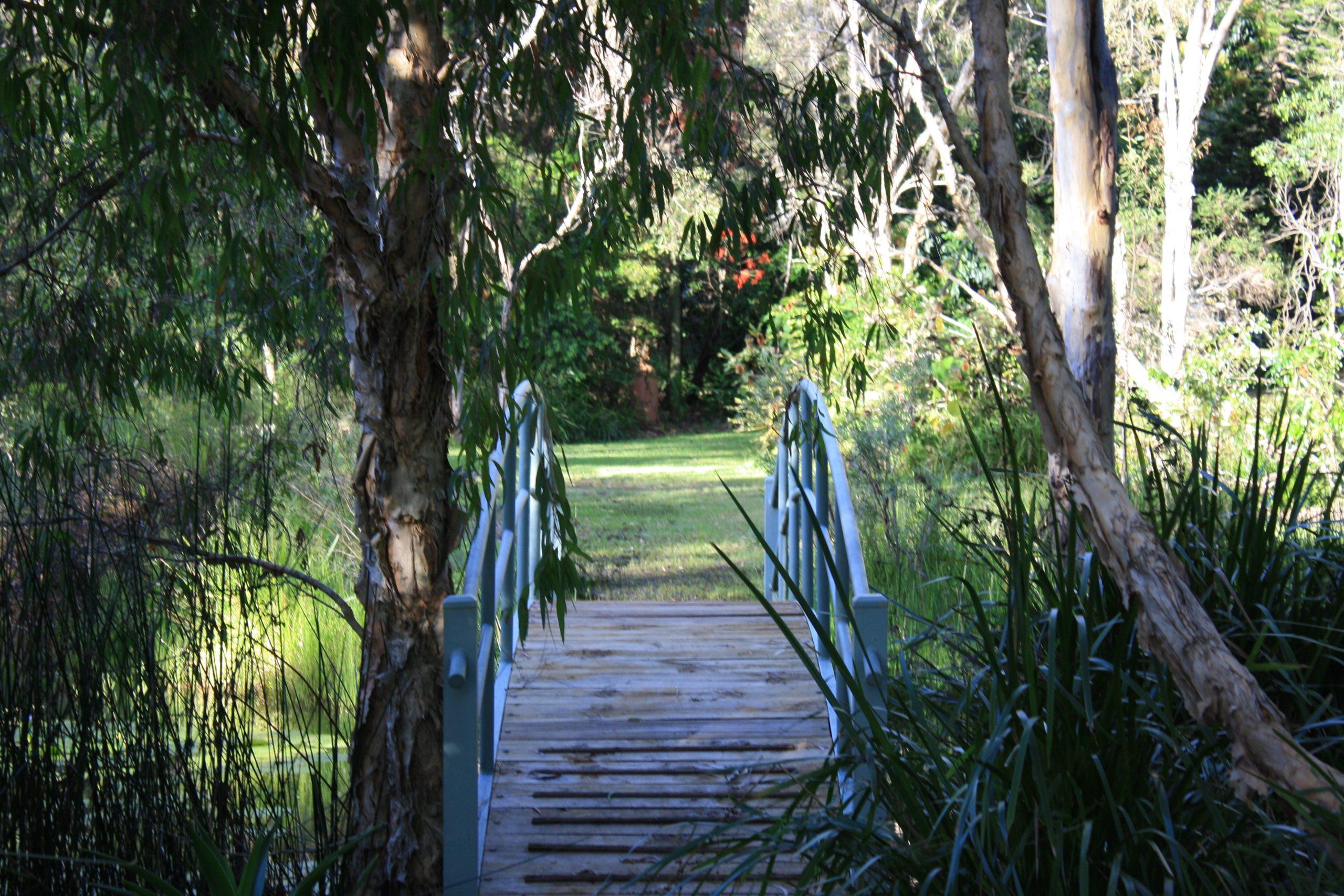 Mudlo Gardens 2 by Vivienne Rockach